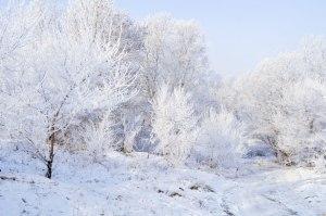 winter-landscape-13527108010wC