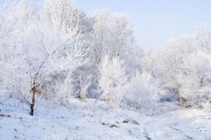 winter-landscape-13527108010wC